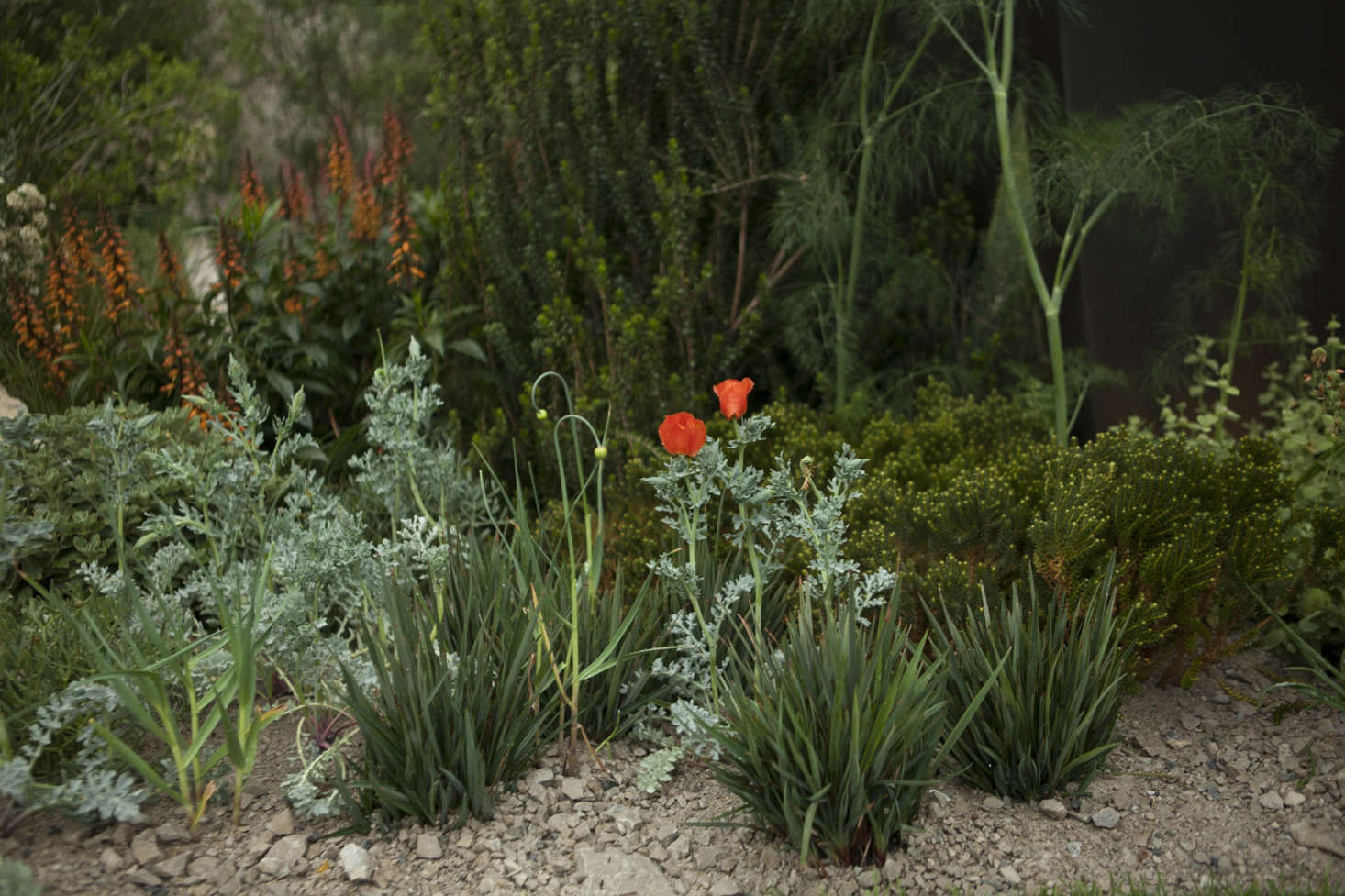 Plants growing in gravel Andy Sturgeon&#8