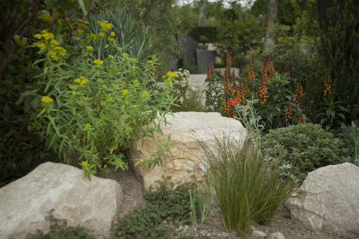 Euphorbia, orange Digitalis canariensis, and grasses growing in gravel Andy Sturgeon&#8