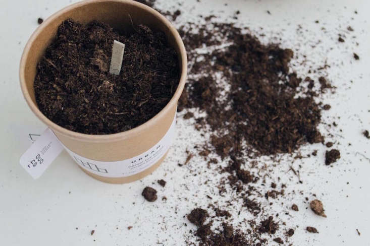 The sticks contain organic seed mixes of chamomile, mallow, sage, lemon balm, and hyssop affixed with a natural glue. Rhoeco&#8\2\17;s planting and drying instructionsinclude how to make a tisane and couldn&#8\2\17;t be simpler.