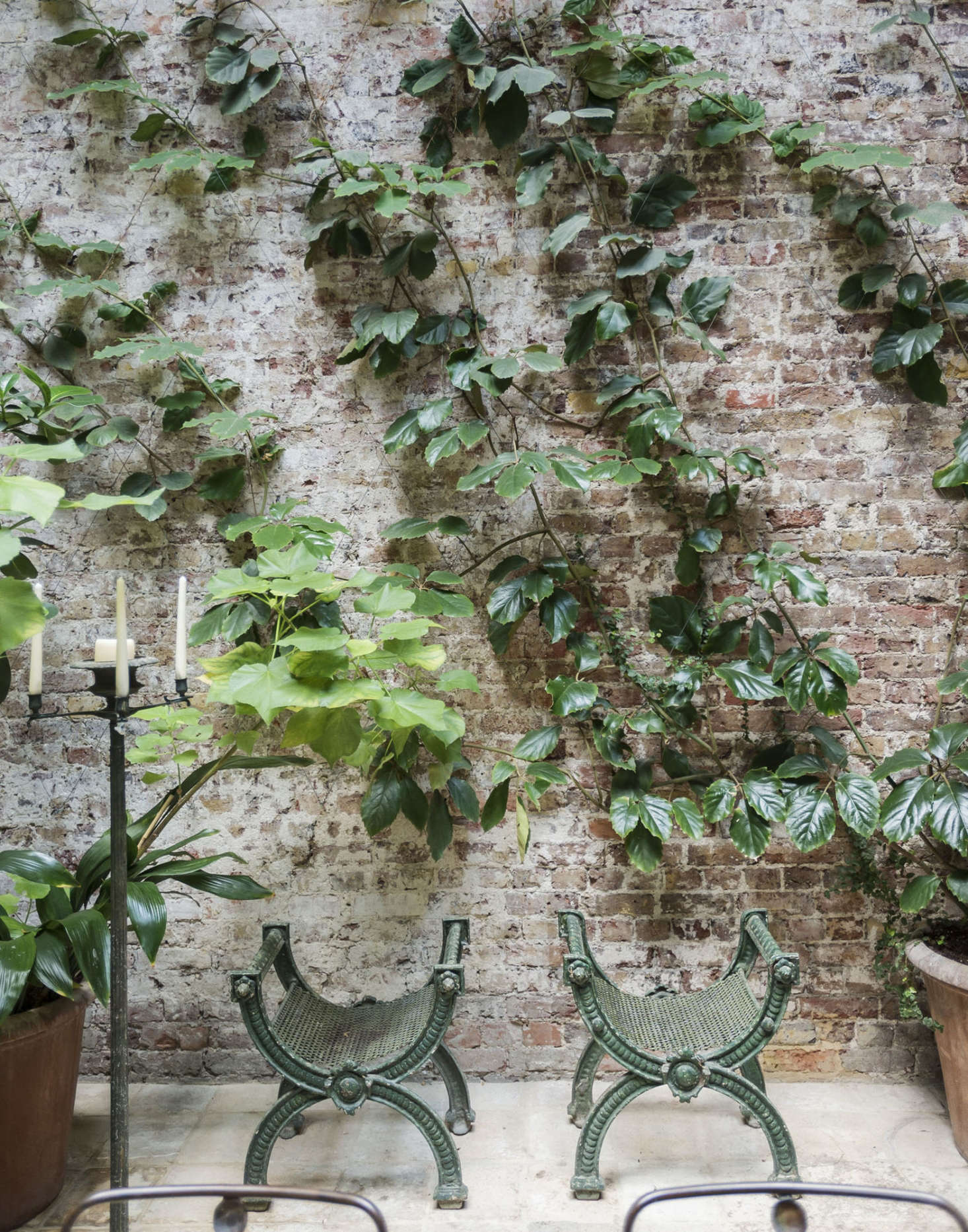 Cissus rhombifolia, or oak-leaf ivy, thrives in low light in designer Rose Uniacke&#8