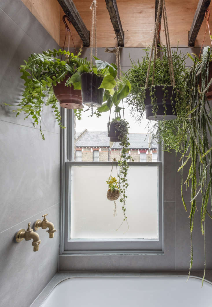 Succulents and other hanging plants in architect Simon Astridge&#8