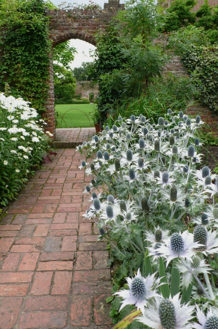 Silver foliage of Eryngium giganteum 'Miss Willmott's Ghost' haunts Vita Sackville-West's world-famous white garden at Sissinghurst Castle in Kent. Photograph by Kendra Wilson.