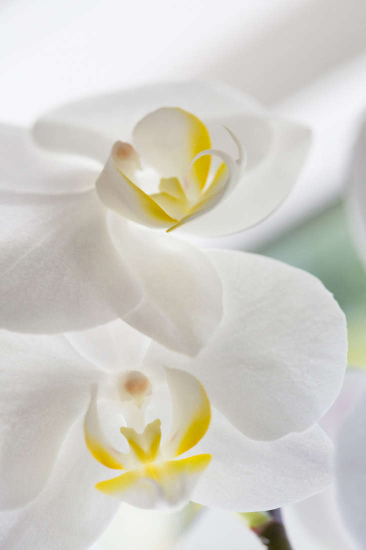 If you put a moth orchid in a west-facing window, the problem is it gets sun in the hot part of the day. &#8