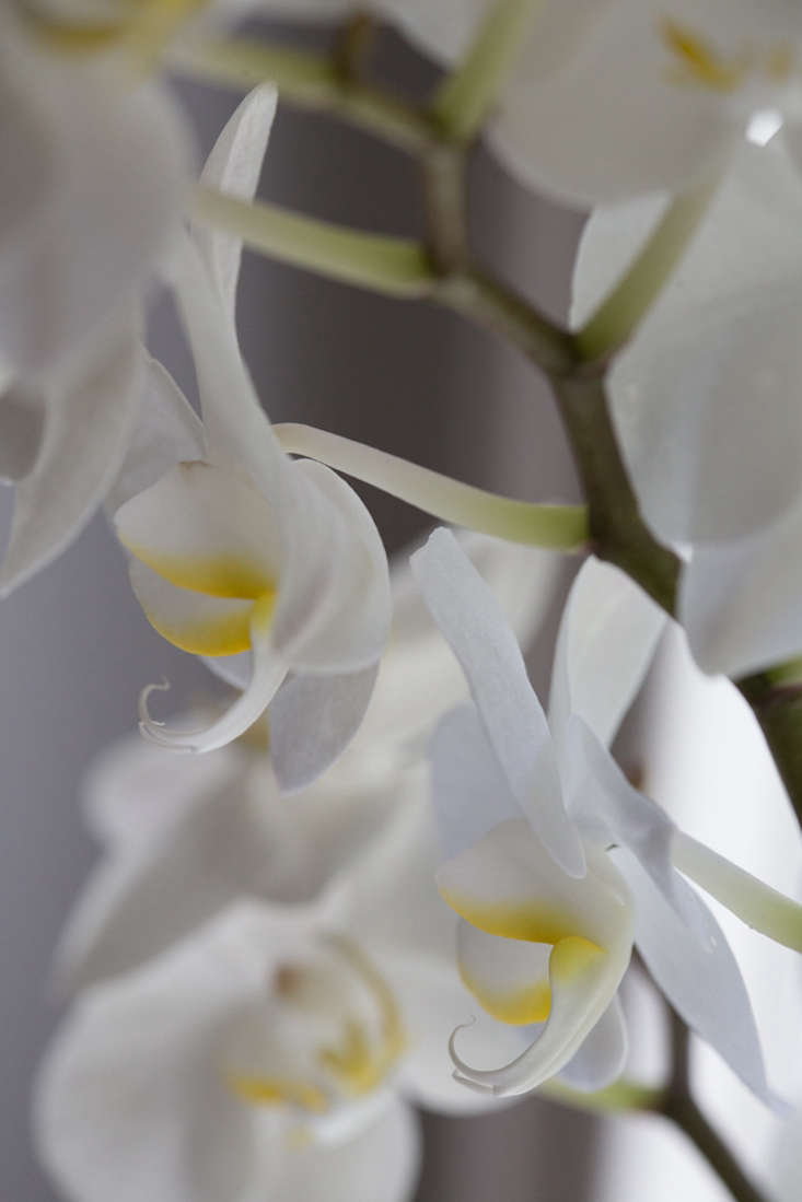 Fertilize your orchid every second time you water it, with a diluted solution of fertilizer. &#8