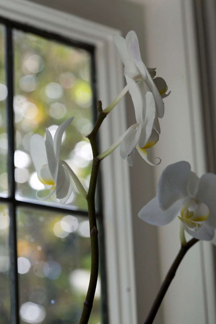 Orchids like humidity. Where many grow, the humidity level is from 70to 90 percent and they are in fog for much of the day. &#8