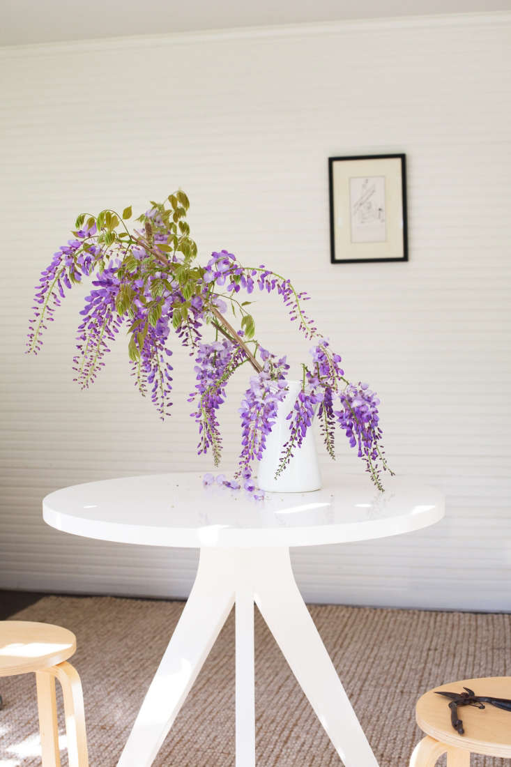 When arranging wisteria, the first step is to get your bearings. Gently prop the vine—it grows on woody, sturdy branches—in a vase or jug of water so you can get a good look at its structure. Does it droop gracefully? Does it need a little shaping? Have its leaves started to appear (they emergeafter the blooms)? If so, is the foliage obscuring the flowers?