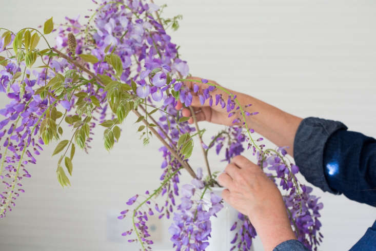 Step three is to gently disentangle the hanging clusters of flowers. Be very, very careful—you can see soft, nubby green stems are all that attach the flowers to the vine.
