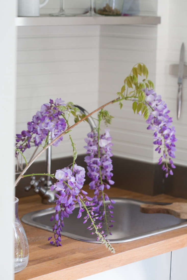Garden designer Tim Callis calls wisteria a thugbecause of its aggressively invasive tendencies. &#8\2\20;You should never turn your back on it,&#8\2\2\1; he warns.