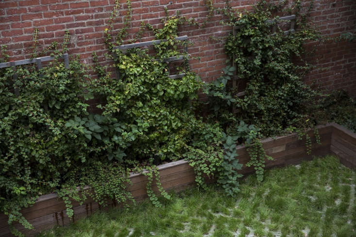 """The back garden's planter is what Thompson calls """"a textural study."""" She underplanted the climbing hydrangeas with blackberry vines, and added Rubis and Stephanandra to mimic their leaf forms."""