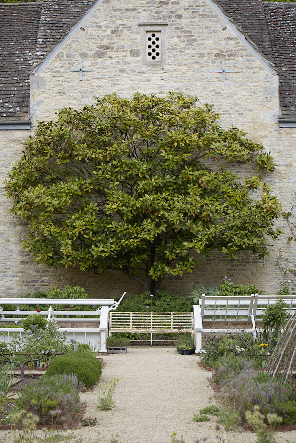 AMagnolia grandiflora adorns the dovecote in the walled garden at Bayntun Flowers. It was taken from a cutting of an older specimen that grew againstthe house.
