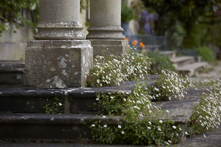 Fleabane softens stone steps and adds romance to columns at Bayntun Flowers in Wiltshire. Photograph by Britt Willoughby Dyer.