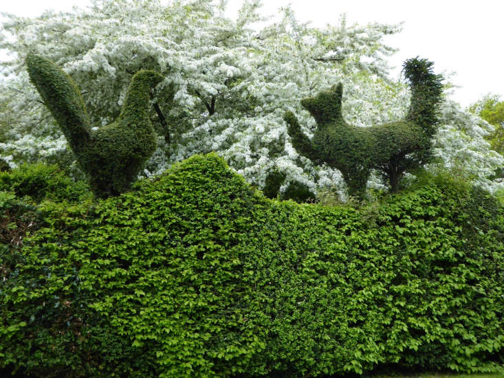 Photograph by Clare Coulson. For more, seeGarden Visit: Charlotte Molesworth's Topiary Garden.