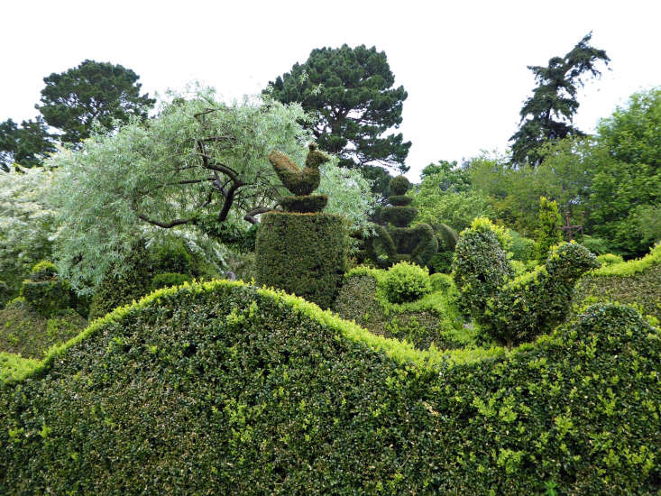 See more of these boxwood topiaries at Garden Visit: Charlotte Molesworth's Topiary Garden. Photograph by Clare Coulson.