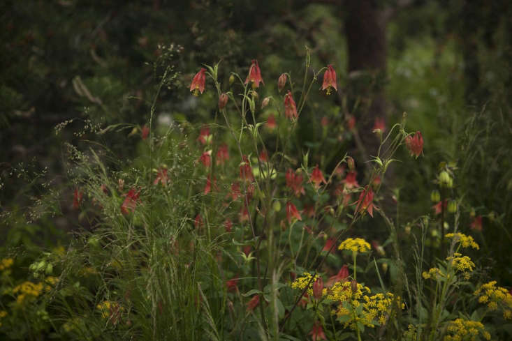 Some of the more colorful wild planting in Charlotte Harris&#8