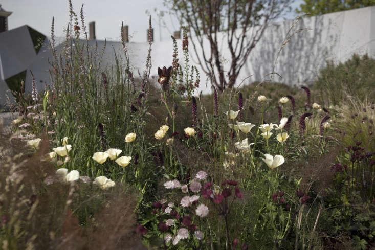 The Jeremy Vine Texture Garden designed by Matt Keightley.