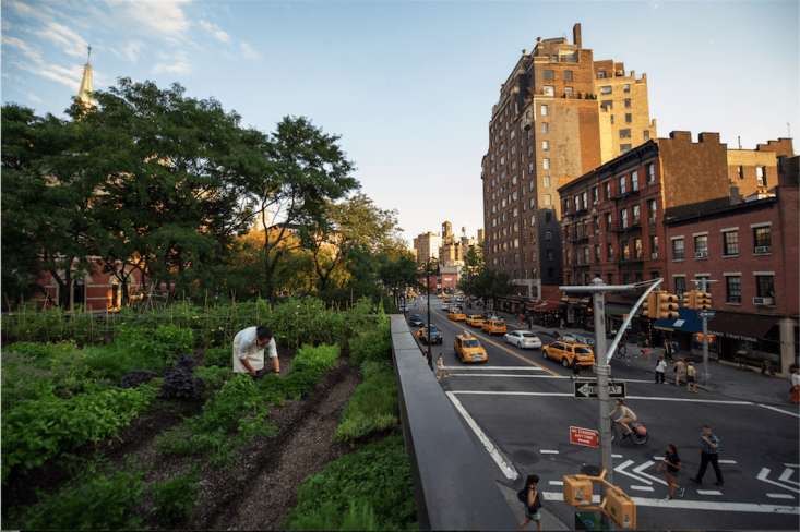Suarez drew inspiration fromBrooklyn Grange to design the \1,000-square-foot rooftop garden in \20\1\2. When he purchased the one-story building, it was an abandoned space that had sufferedfire damage and required a serious remodel.