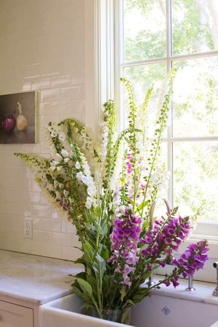 I cut an armload of flowering foxgloves, clipping the stems at the base of the plant.