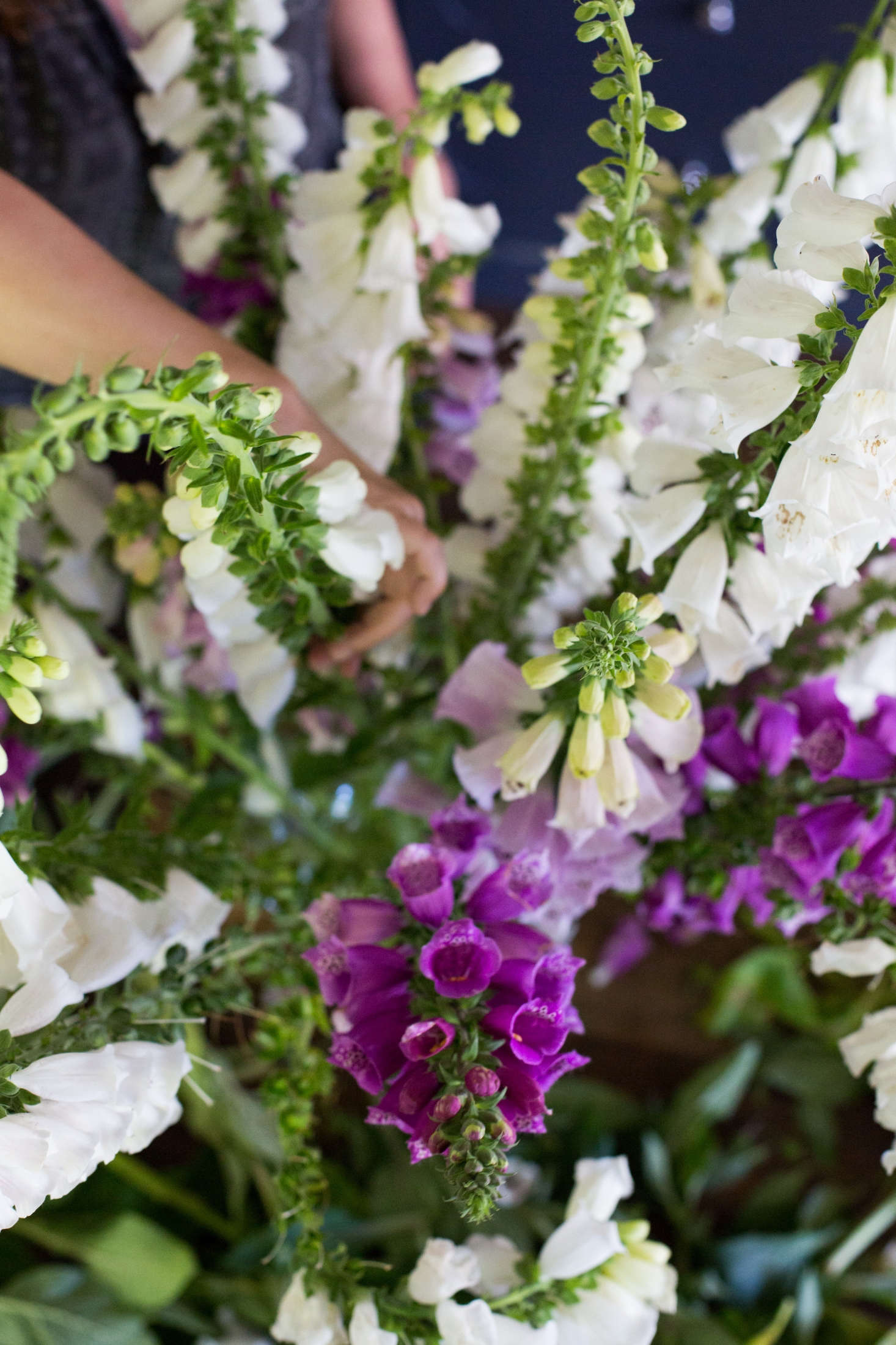 Bent, crooked, andtwisty foxglove stalks are useful because they will soften the linesof a floral arrangement and prevent it from looking too stiff.