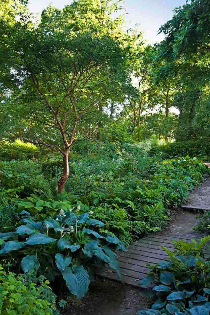 Chatto has a brilliant eye for the rhythm and balance in a good garden design and in the Wood Garden hostas are often used to provide perfect punctuation points.