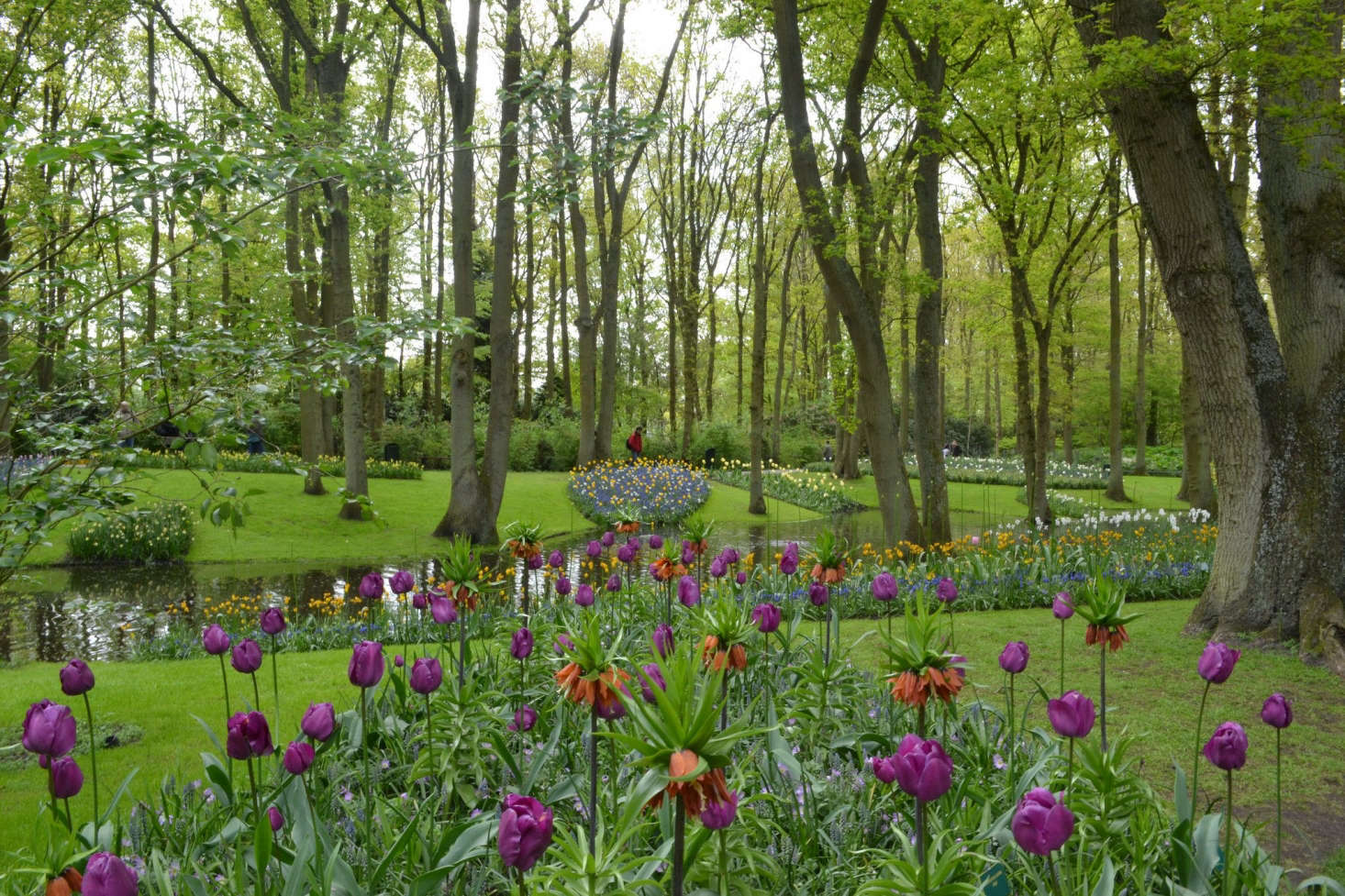 In the Keukenhof gardens in Lisse, Netherlands, fritillaria and tulips bloomen massein early May. Photograph byOlgavia Flickr, from Garden Ideas to Steal from the Netherlands.