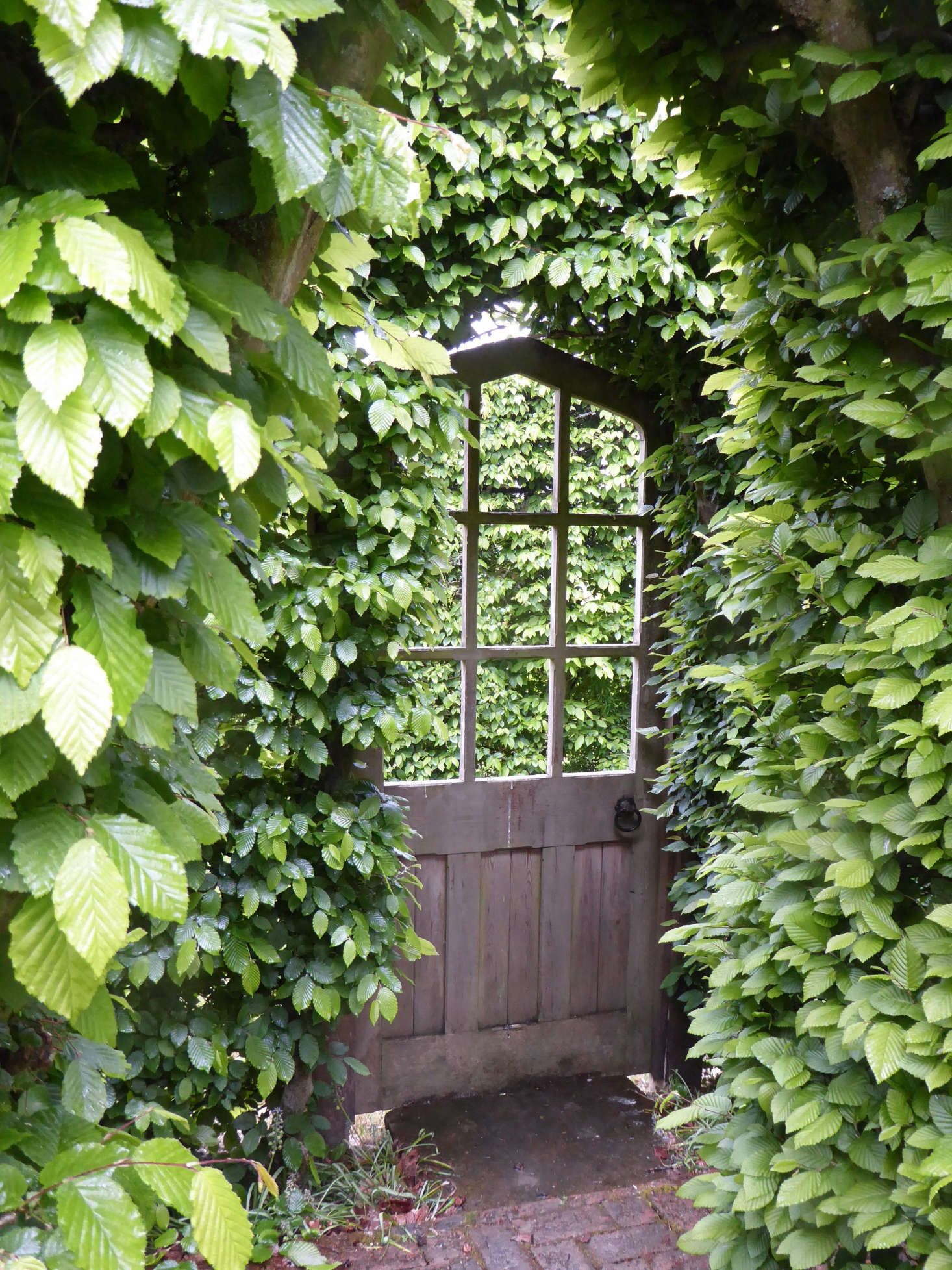 A wooden door in a hornbeam hedge leads to a secluded miniature green garden. Photograph by Clare Coulson.