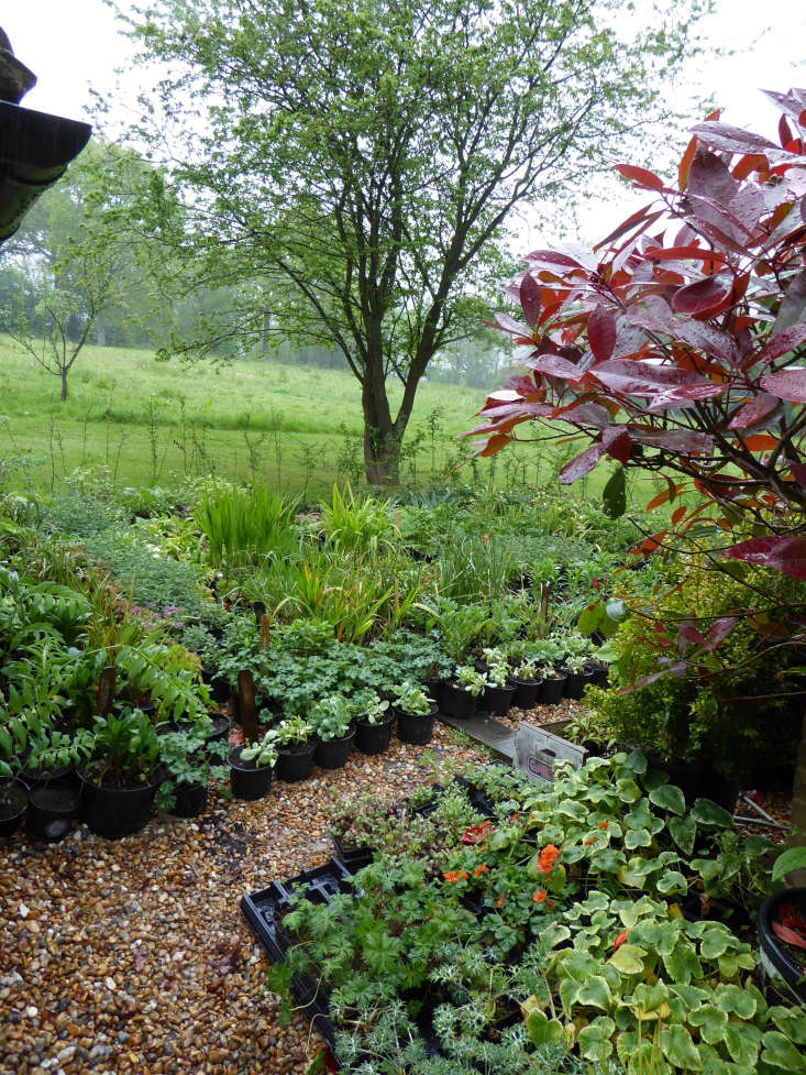The garden's enviable and newly installed &#8\2\20;nursery&#8\2\2\1; area of stock plants.
