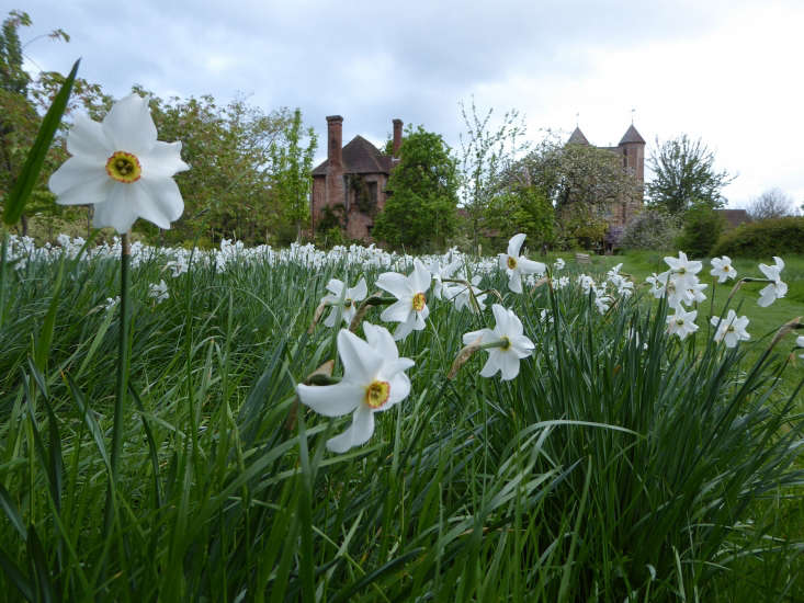 Narcissus &#8\2\16;Pheasant&#8\2\17;s Eye&#8\2\17; is planted in swaths in the meadow.