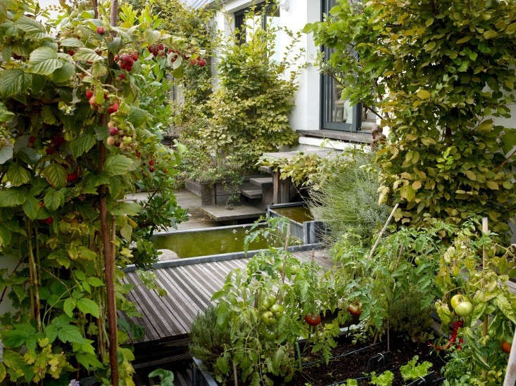 On a roof in the fashionable 8th arrondissement, landscape architect Camille Muller designed a 650-square-foot roof garden with trellised apple and pear trees, untamed raspberry bushes, and horsetails growing beside a miniature pond. Photograph by Marion Brenner.