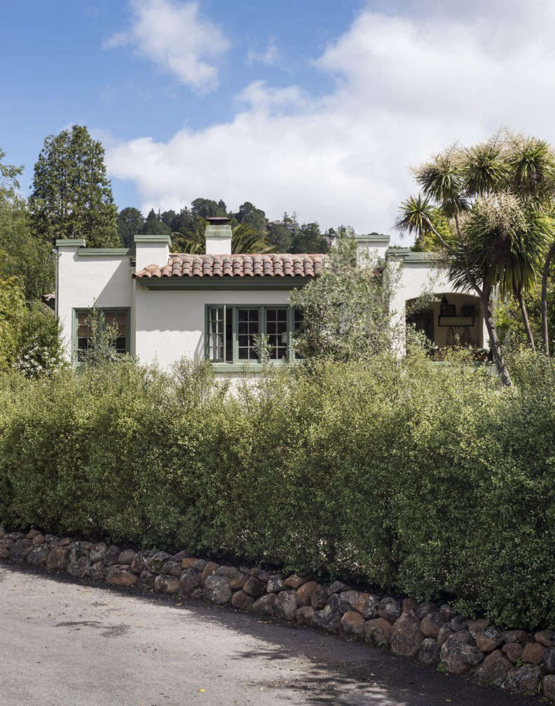 I replaced a fence with a hedge of Pittosporum tenuifolium &#8