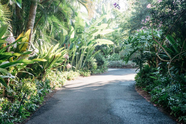 The drive into the property, steps from Kanaha Beach Park, is nearly overgrown with vegetation.