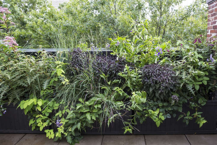 """Several plants on the terrace are nightshades, which Thompson calls """"my friends in the sinister world."""""""