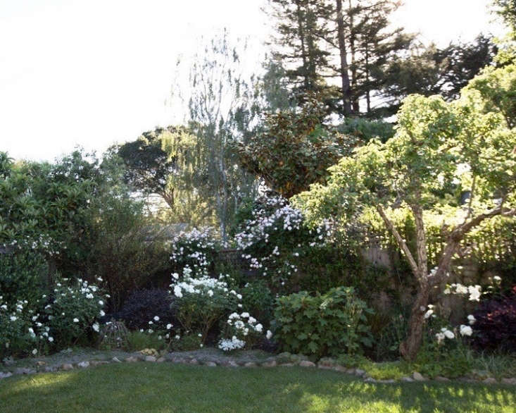 Rose garden on a budget. Five years later, I&#8\2\17;ve added other plants to the garden beds.