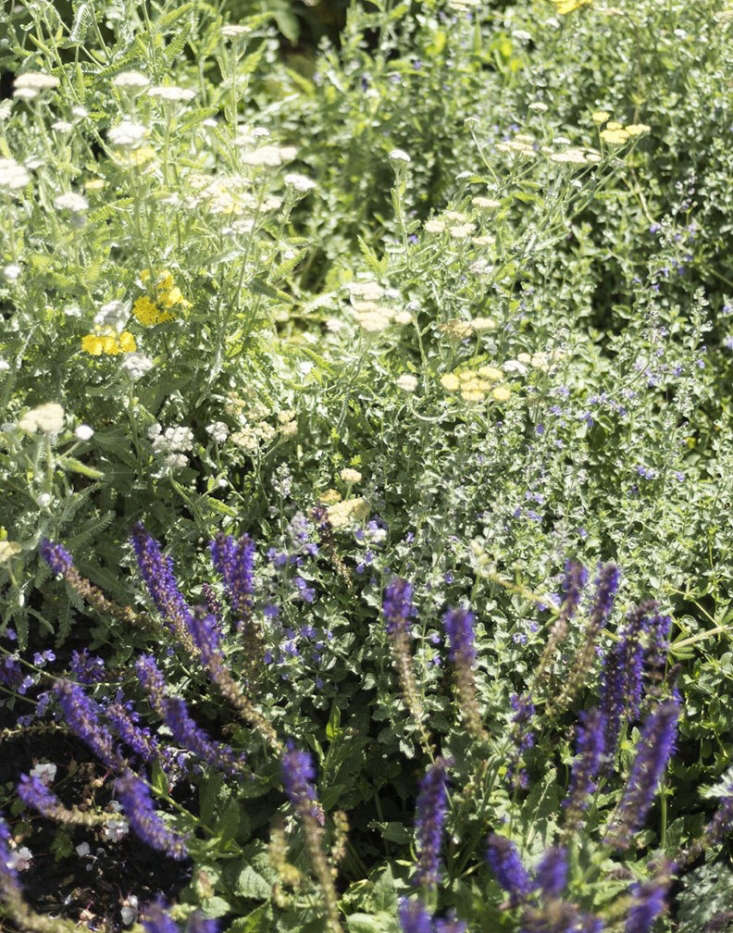 In autumn, I divide clumps of perennials such as yarrow and purple salvia to swap for plants my friends have.