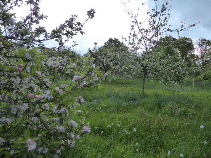 Young orchard trees.