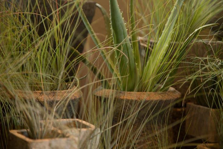 Succulents and wispy grasses in terra cotta pots at Green Door Design.