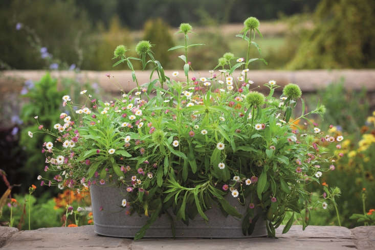 Photograph by Jonathan Buckley, from Container Gardening: Sarah Raven's 7 Tips for Perfect Flower Pots.