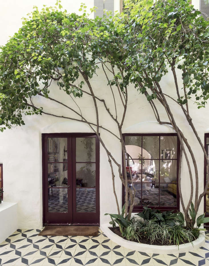 Garden designer had mature ficus trees &#8\2\20;limbed up&#8\2\2\1; to create graceful silhouettes in a tiled courtyard garden in Los Angeles.