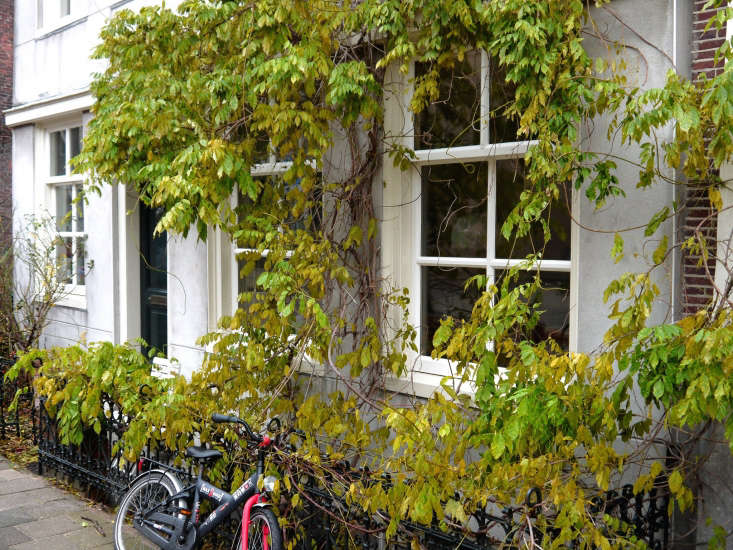 In a city garden in Amsterdam where space is at a premium, vines and climbers soften a facade and create curb appeal. Photograph by Fons Heijnsbroak via Flickr.