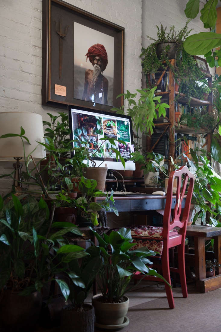 Nearly every corner and open space, including her work area, is inhabited by a plant. Some of the many species Oakes has include: Maidenhair Fern (Adiantum), Bromeliads, Grape Ivy (Cissus rhombifolia), Codiaeum, Diefenbachia, Maranta, Peperonia, Schefflera, and Zebrina.