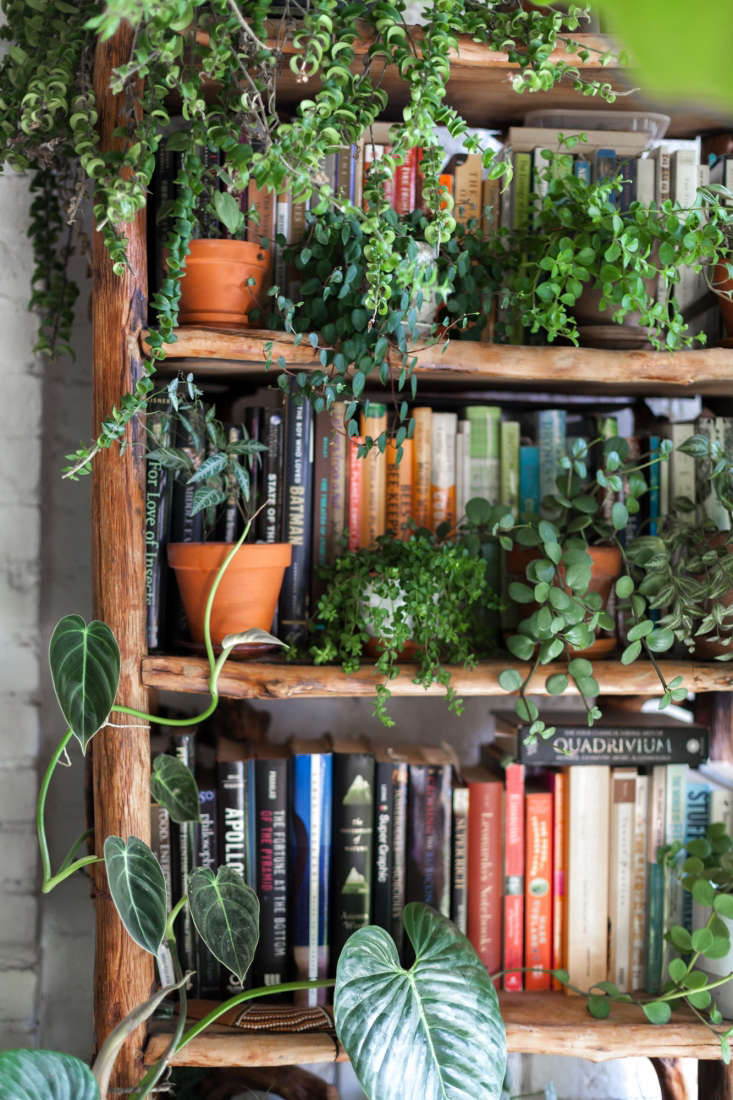 Books and ferns happily co-exist.