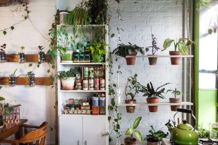Photograph courtesy of @homesteadbrooklyn, from Living with Houseplants: Four Years Later in a Brooklyn Apartment.