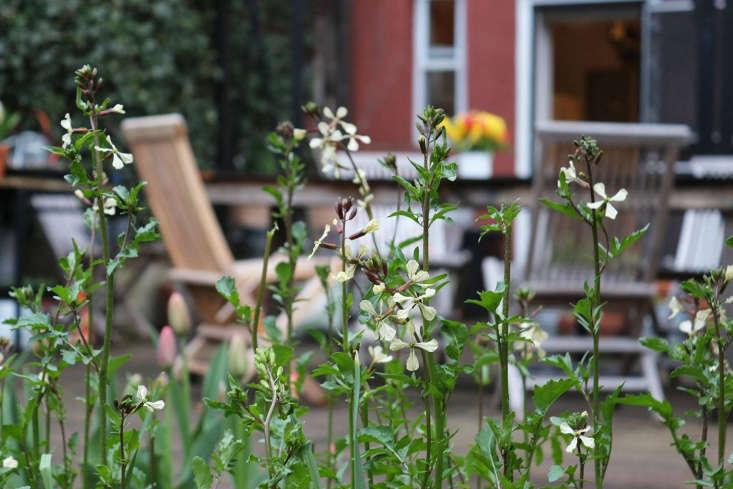 Arugula flowers by Marie Viljoen