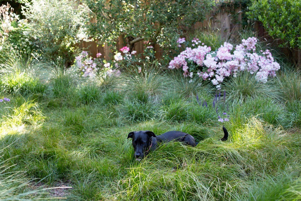 See more of this meadow in Garden Visit: A Backyard Meadow in Mill Valley, CA. Photograph by Mimi Giboin.