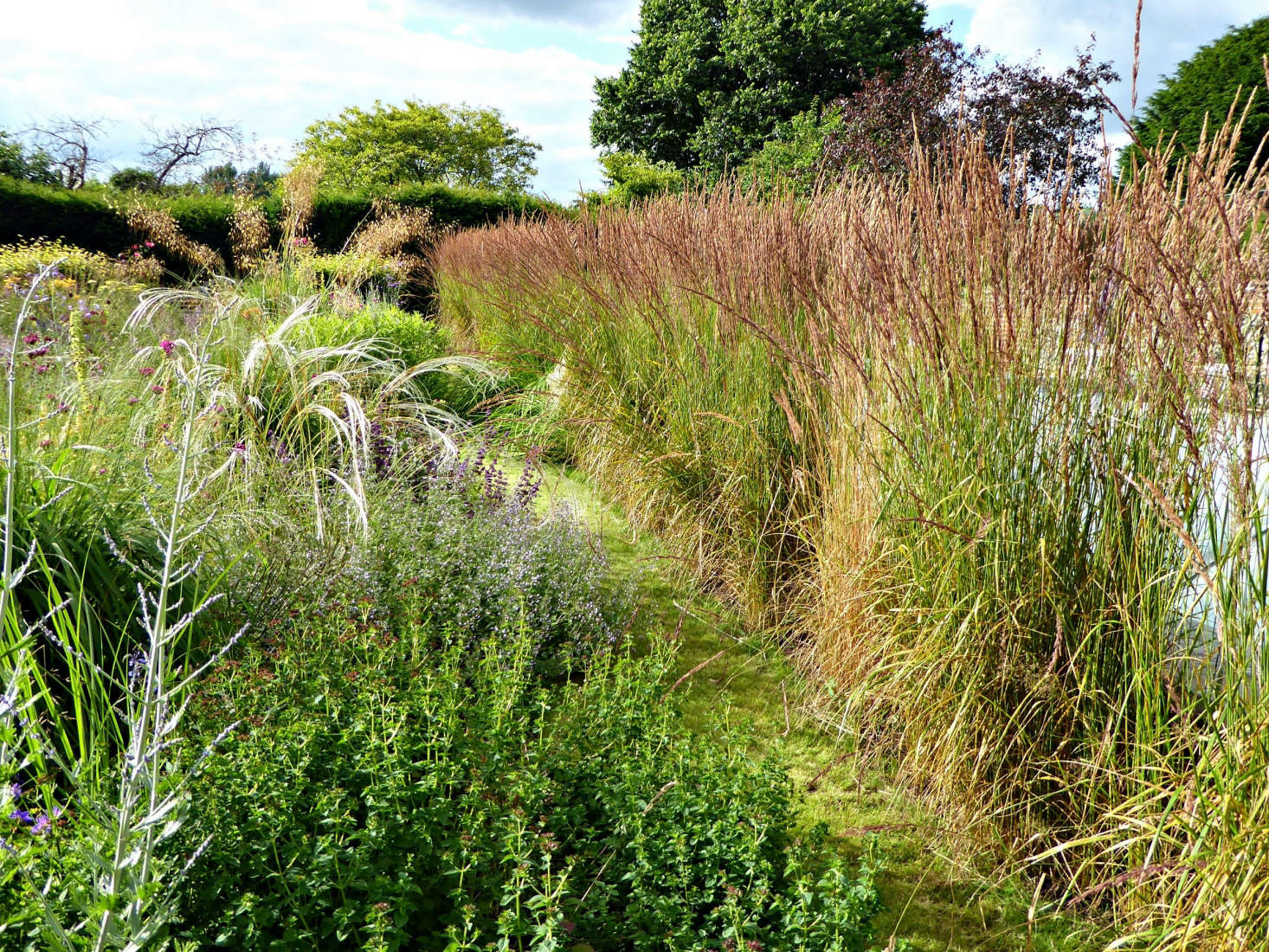 When they bought the house, Catherine and her husband, Paddy, installed a big swimming pool. To shield it from the rest of the garden, Catherine has planted a long wall of Calamagrostis &#8