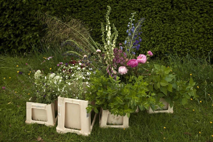 The bounty of June: handfuls ofof mint, with long grasses and the small-flowered white crambe and Ammi majus, will support the bigger blooms of peony with claret-colored Astrantia, and taller spires of foxglove and larkspur.
