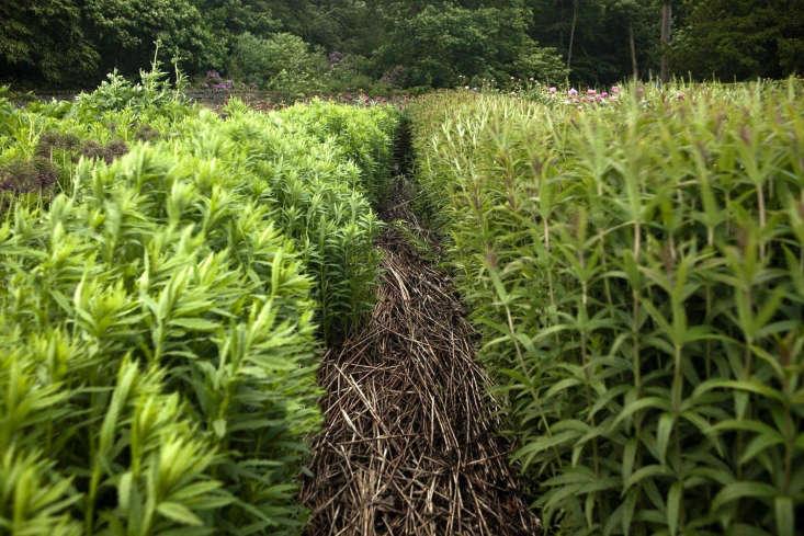 Channels of straw define the cutting garden.
