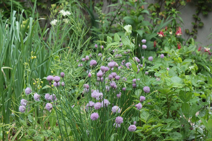 Chive blossoms and garlic by Marie Viljoen