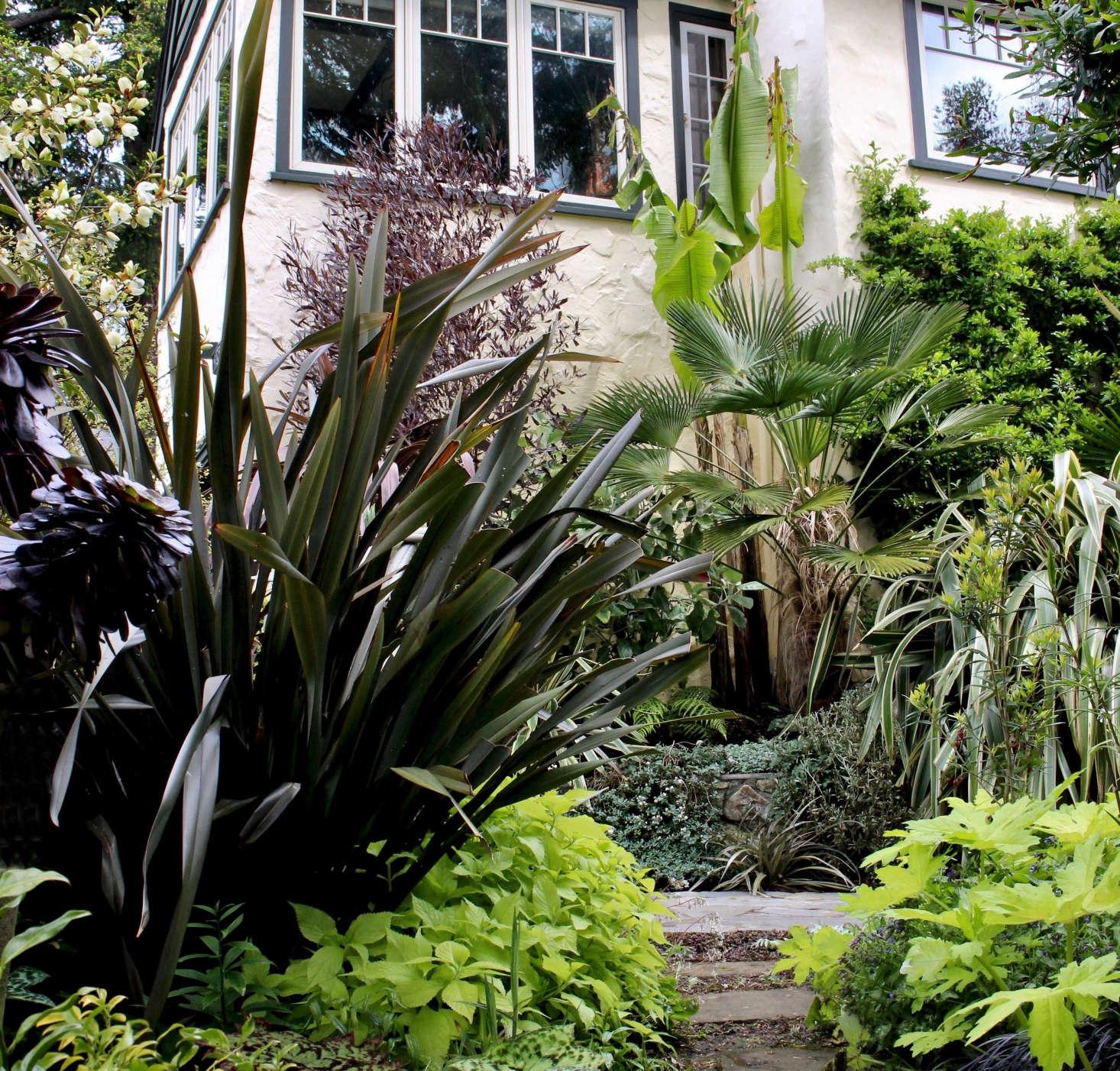 Dense plantings of southern hemisphere foliage plants define Smyth&#8