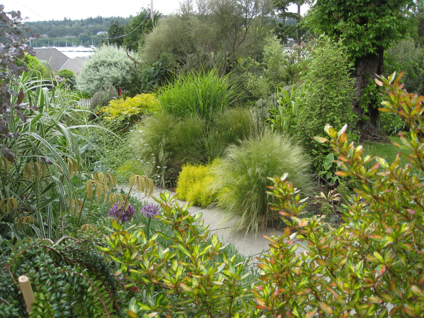 A collection of textural grasses lines the front path.Photograph by Graham Smyth.