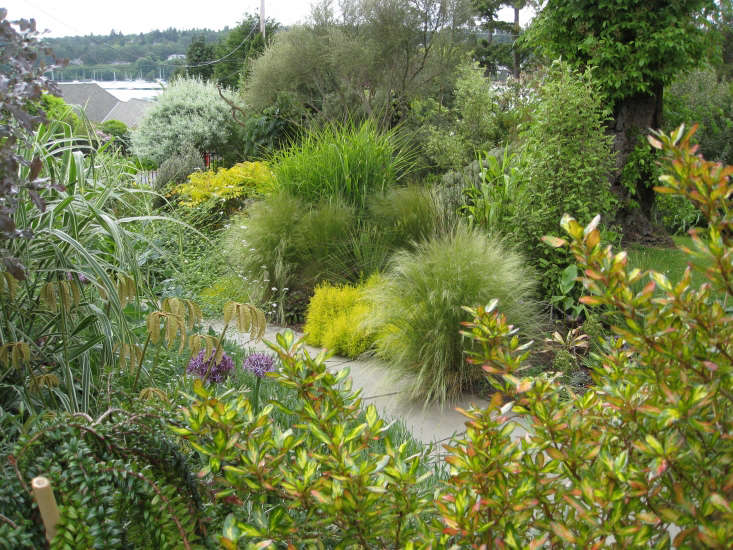 A collection of textural grasses lines the front path. Photograph by Graham Smyth.